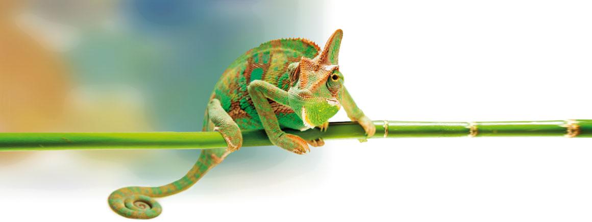 Kameleon-Slider-2